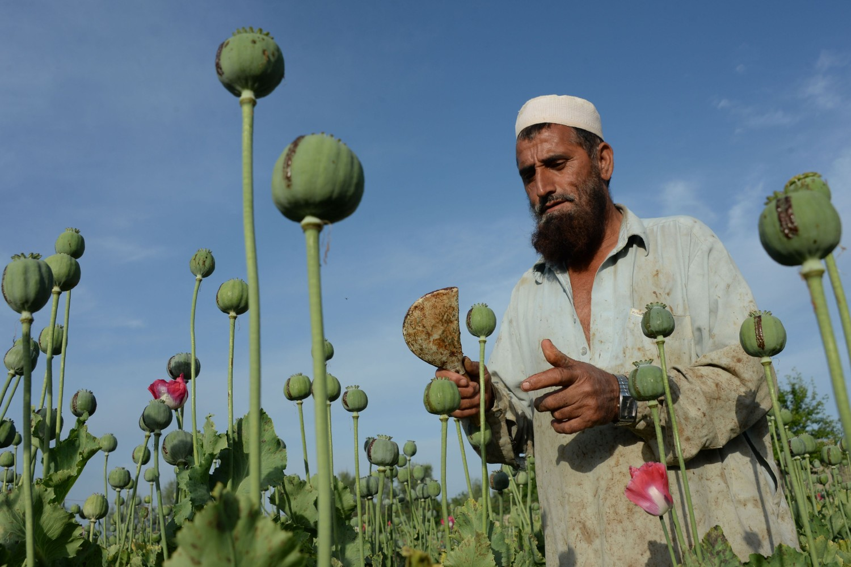 Avganistanski farmer prikuplja sok iz cvetova opijuma u provinciji Nangarhar, 19. april 2016. (Foto: Noorullah Shirzada/AFP/Getty Images)